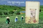 Trà Ô Long Việt Hộp Sữa